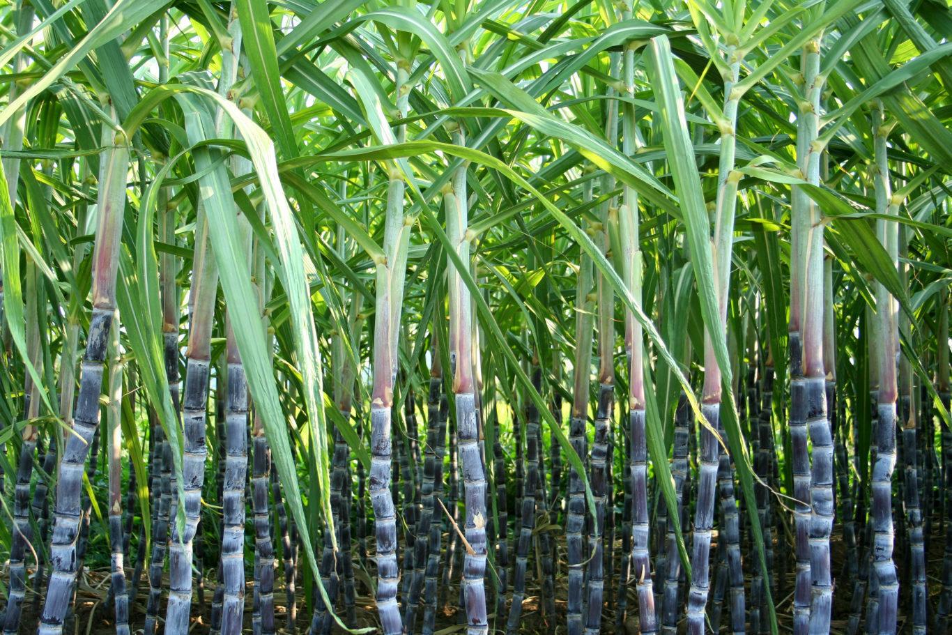 bambus alko90.sk